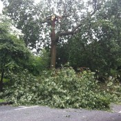 "Tree down by the ""tot lot"" on 3rd Street by Borough Municipal Center"