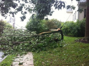 "Closer view of tree down by the ""tot lot"" on 3rd Street by Borough Municipal Center, took down communication lines"