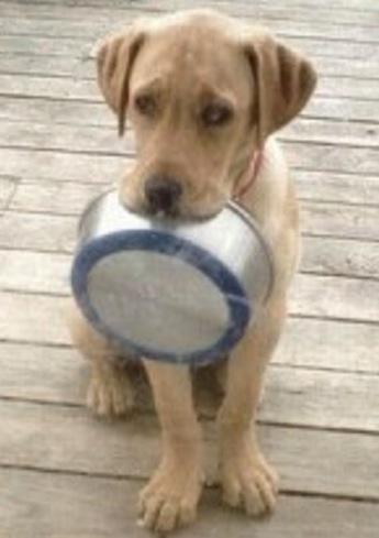 Hungry Dog - image courtesy Montreal Dog Blog